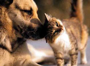Cat Rubbing a Dog's Nose